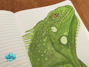 The Coloring Notebook